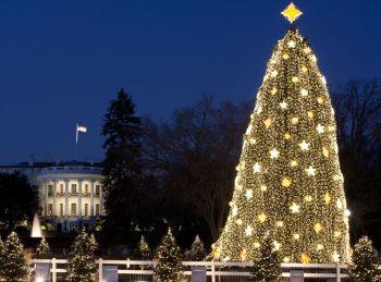 logo national-christmas-tree-lighting 350