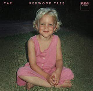cam-redwood-tree